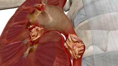 Visible Body Launches Physiology & Pathology Virtual Anatomy App
